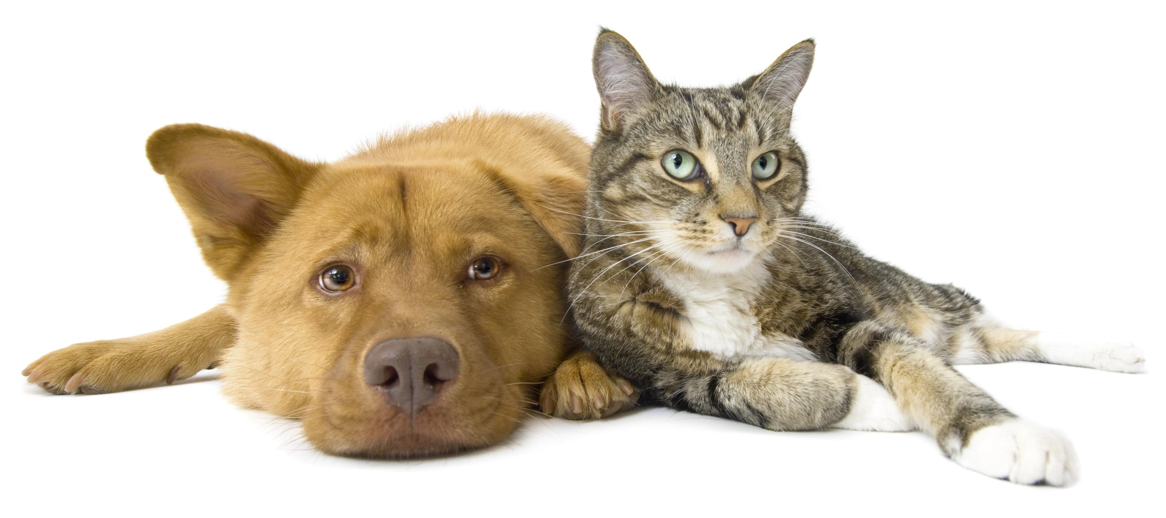 Compare Kogan Pet Insurance